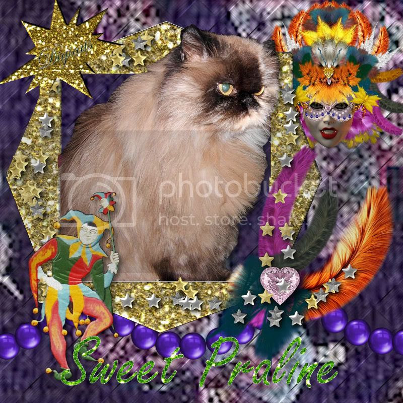 Persian Cat,Mardi Gras