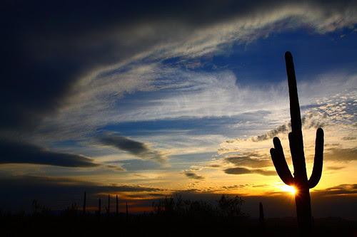 IMG_6464 Saguaro, Sunset
