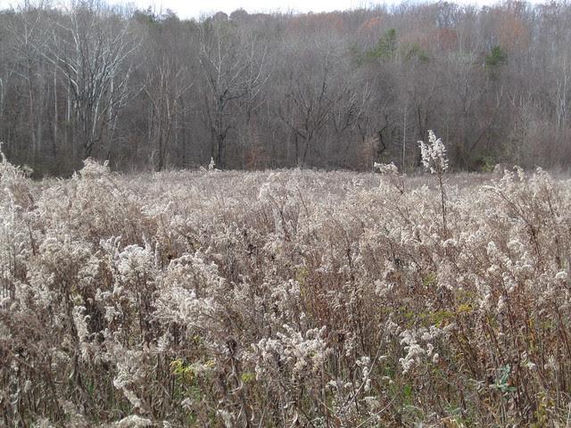 November meadow