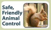 Pest Control in NJ / Animal Control in New Jersey-safe control Image