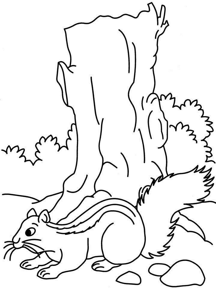 Coloriage Ecureuil à Imprimer