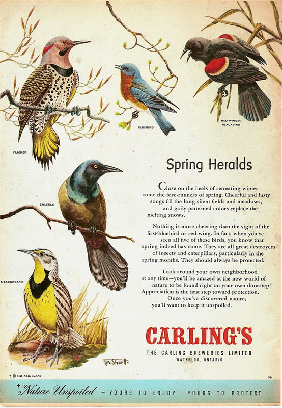 Spring Heralds.