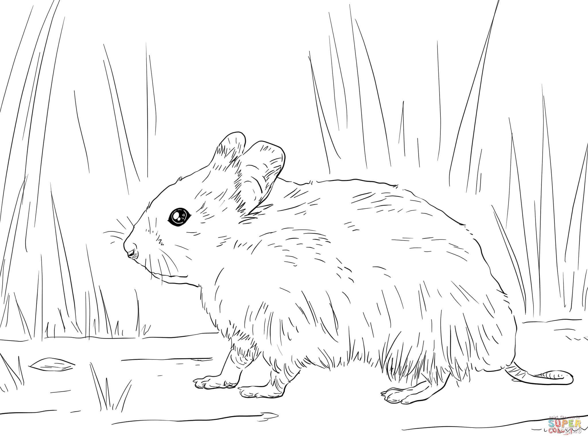 luxus ausmalbilder hamster zum ausdrucken  top kostenlos