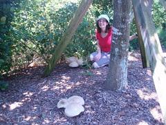 gigantic mushrooms