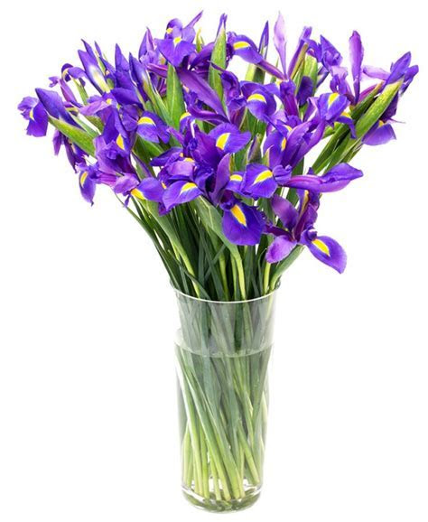 Weekly Flower Delivery   Iris   Blue