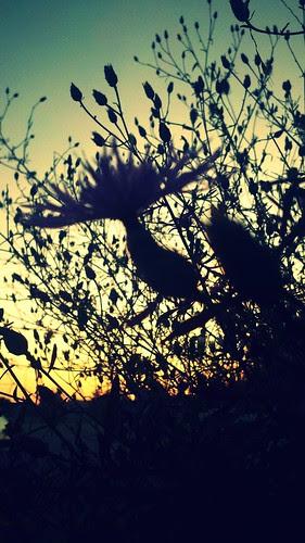 Sunrise & Silhouette.2