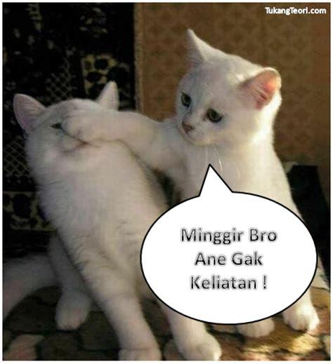 gambar kucing lucu  komentar facebook dulayex blog