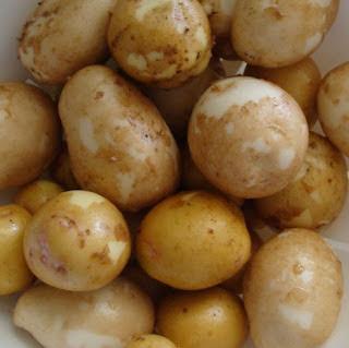 First ever potato harvest