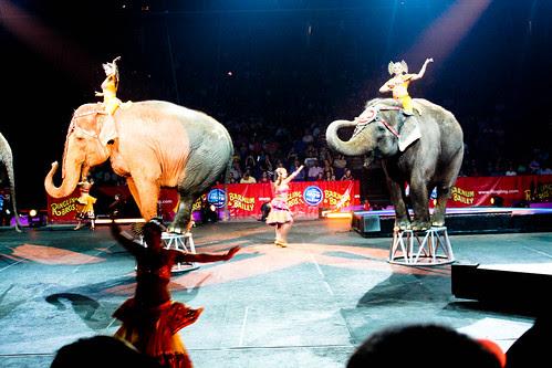 Circus-17