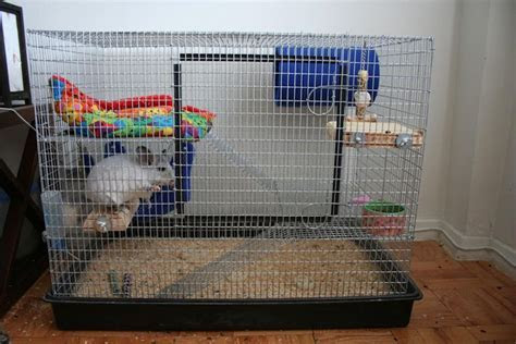 Chinchillas as Pets   Cages for Pet Chinchillas