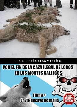 Hermano Lobo 1 Galicia Digital