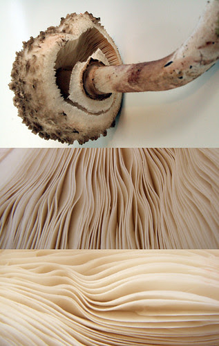 the mushroom pages