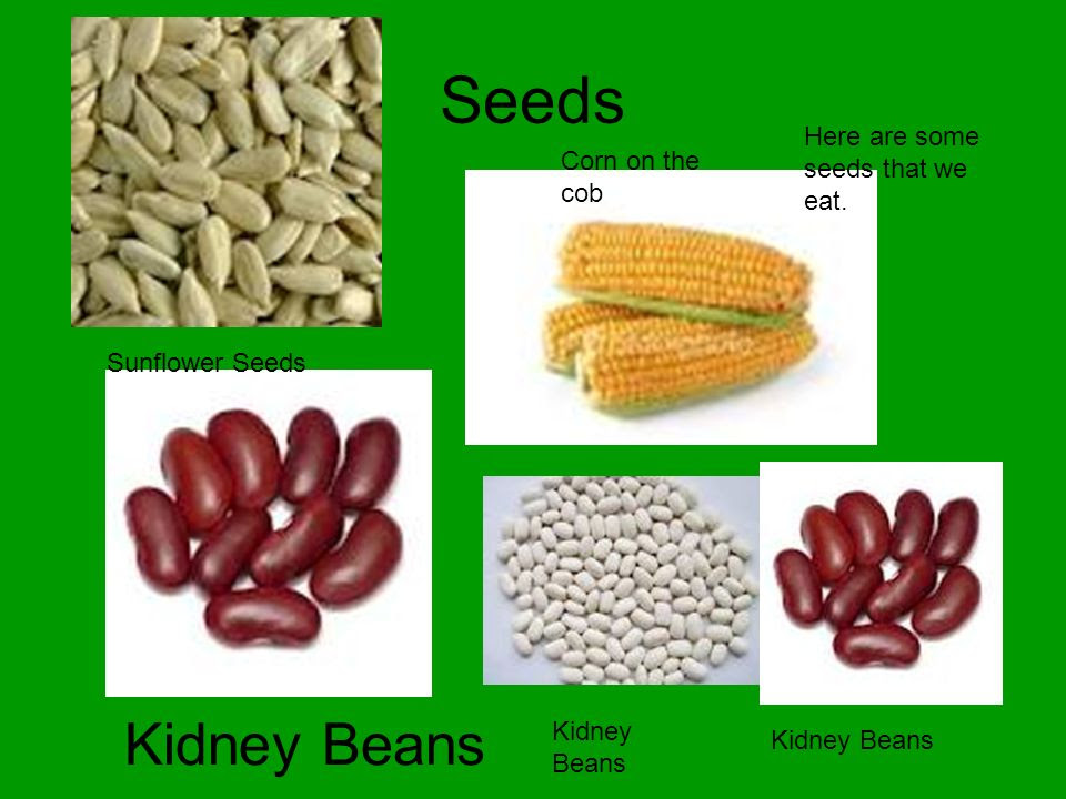 Seeds+Kidney+Beans+Here+are+some+seeds+that+we+eat