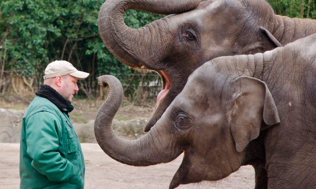 Dieta Y Alimentación De Los Elefantes Indios Imágenes Y Fotos