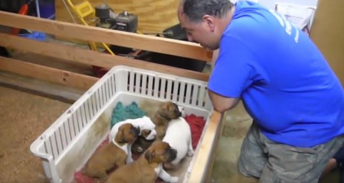 Nada parecía hacer dormir a sus cachorros y este hombre lo consigue del modo más adorable