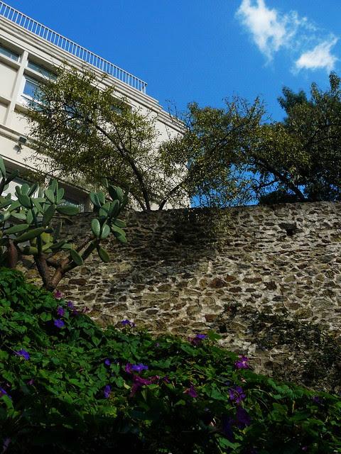 la face cachée du plus vieux bâtiment du Laboratoire Arago: la cour intérieure et les ipomées