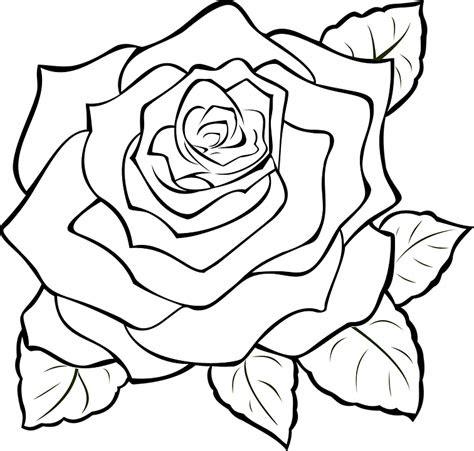 rose mekar penuh gambar vektor gratis  pixabay
