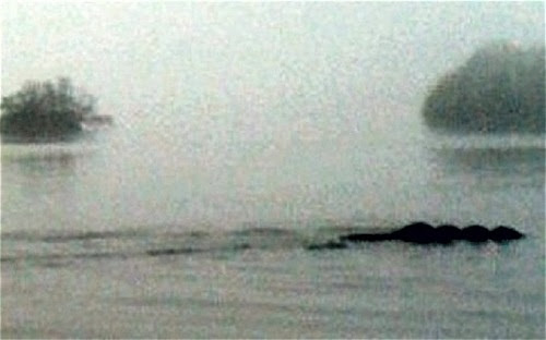 """Kayaker Takes """"Best Ever"""" Shot of English Sea Monster Using Cellphone"""