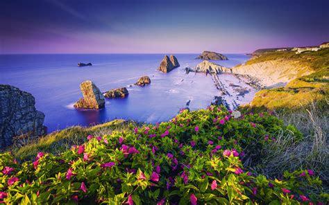 wallpaper coastline purple flowers beach coast rocks hd nature  wallpaper