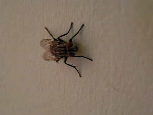 A fly on the wall.... by evesdropping, on Flickr