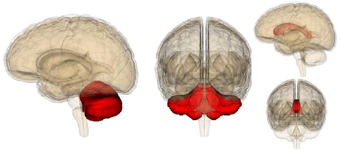 Neuroscience and Biobehavioral : The Cerebellum's Predominant Role in Creativity