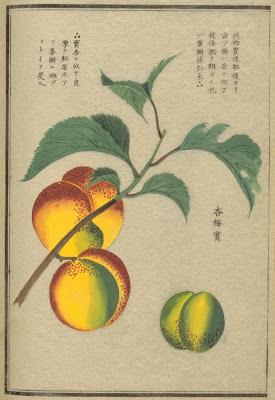 japansese fruit tree