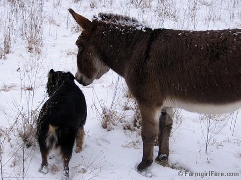 The Daily Donkey 117