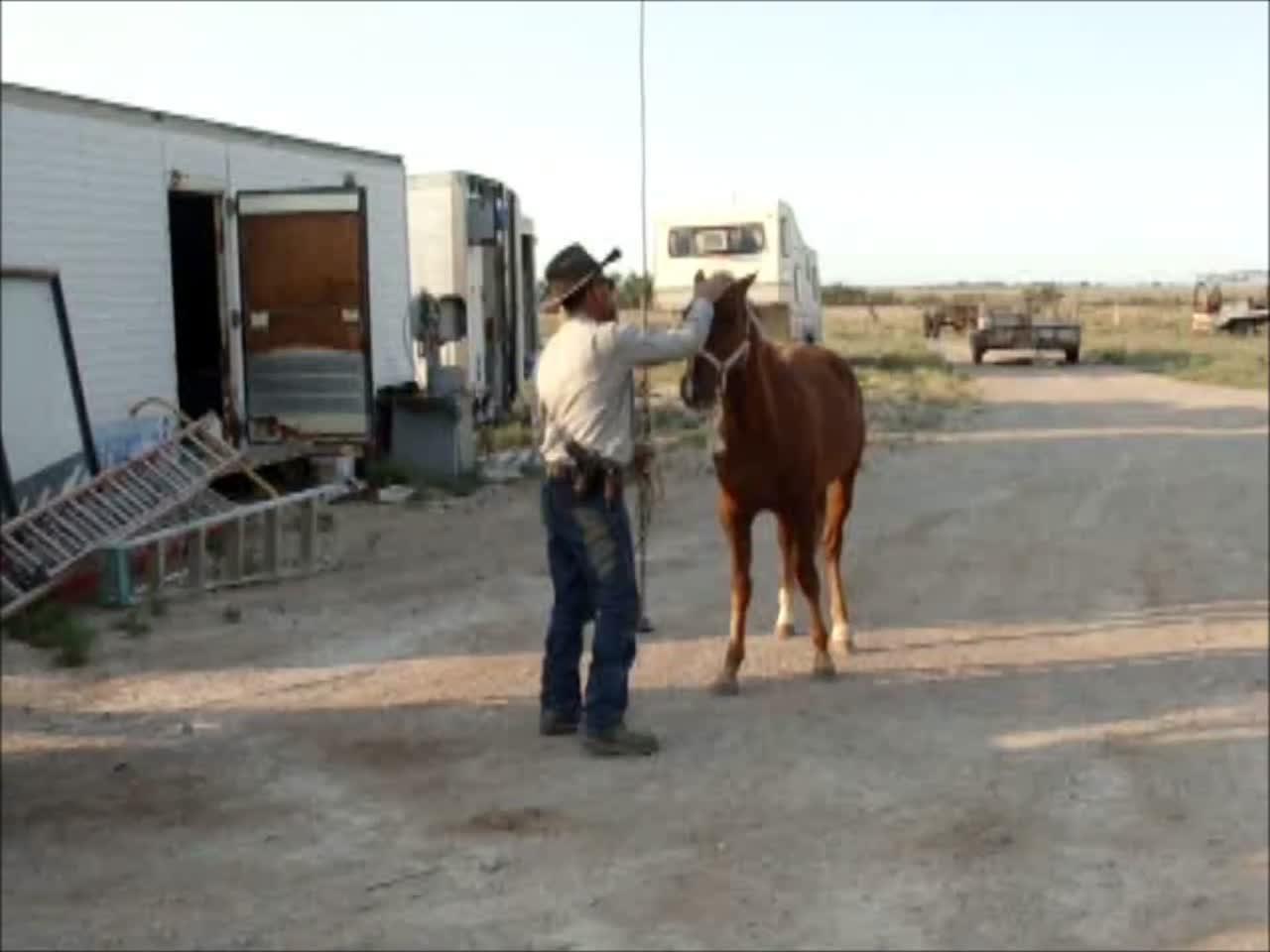 Equine Snuff Video
