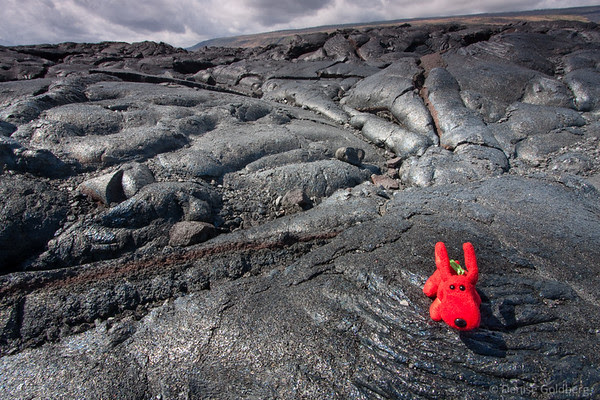 Rover posing on the very black rocks at the end of chain of craters road, hawaii volcanoes national park
