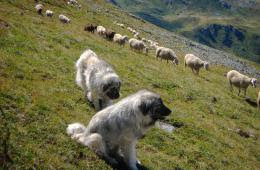 Собаководство на Руси