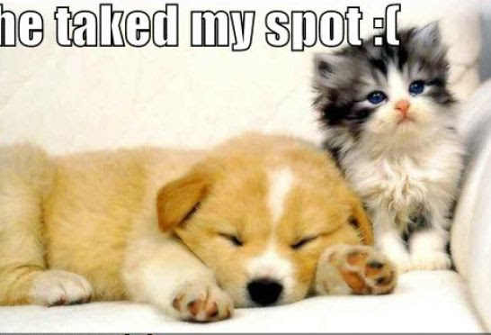 puppy and kittens pictures. Kittens and puppies cat