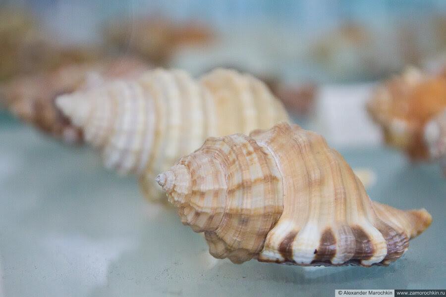 Раковины моллюсков в музее ракушек Корфу