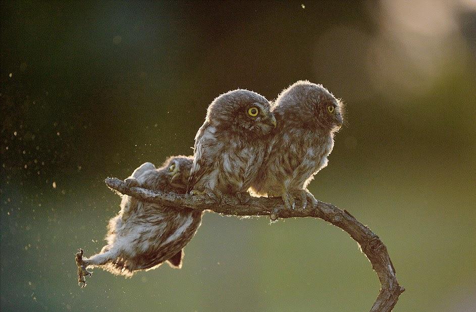 perierga.gr - Χιουμοριστικά στιγμιότυπα της άγριας ζωής