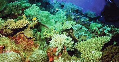 تلوث الشعب المرجانية لواحدة من أجمل جزر هاواى ببكتريا غامضة