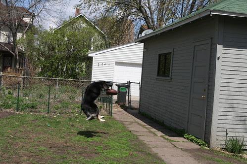 Backyard Veggie and Flower Garden