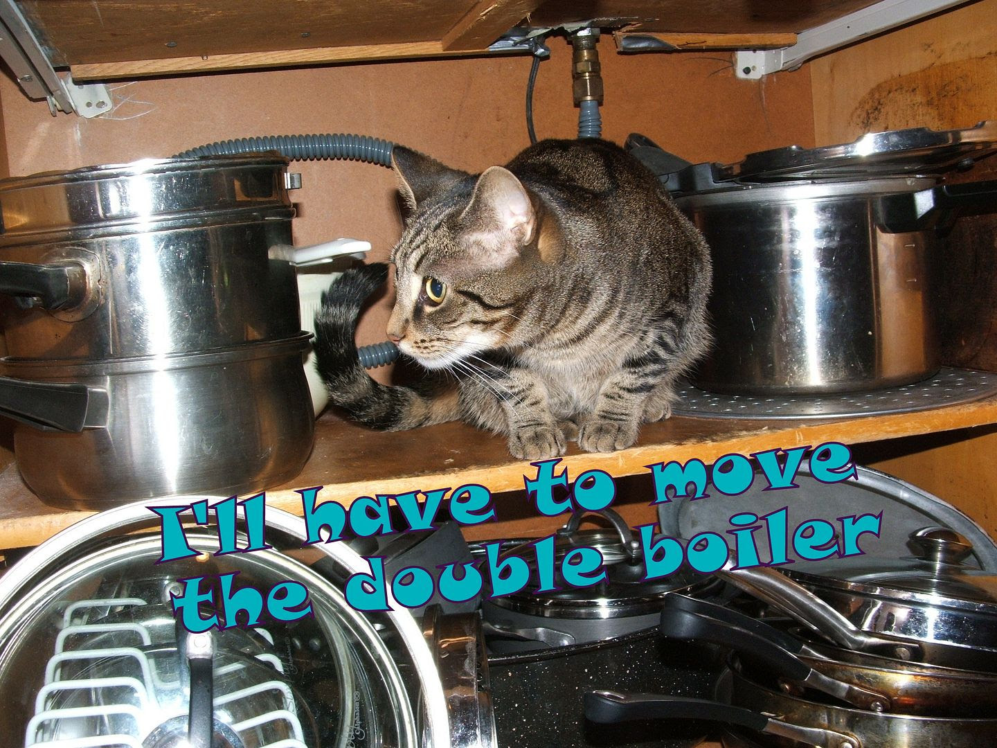 by Angie Ouellette-Tower for http://www.godsgrowinggarden.com/ photo DSCF8053_zpsee3gsgc0.jpg