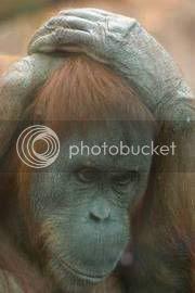 Sad, sad monkey