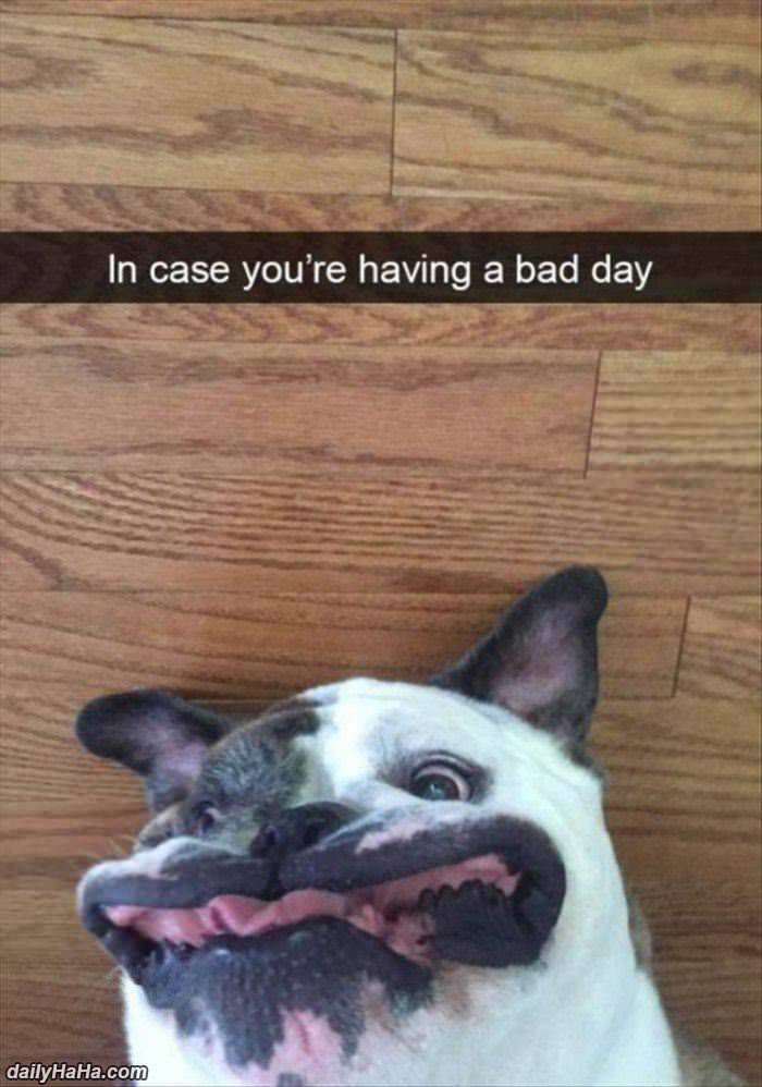 In Case Your Having A Bad Day