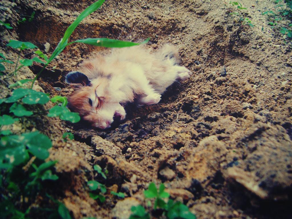 Dead Hamster My First Pet Dizapher Flickr