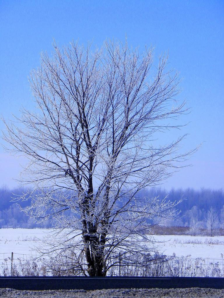 Poetry Of Winter