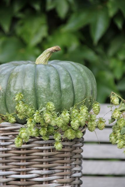 wicker basket, pumpkin & greenery