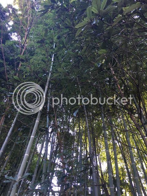photo IMG_1826.jpg