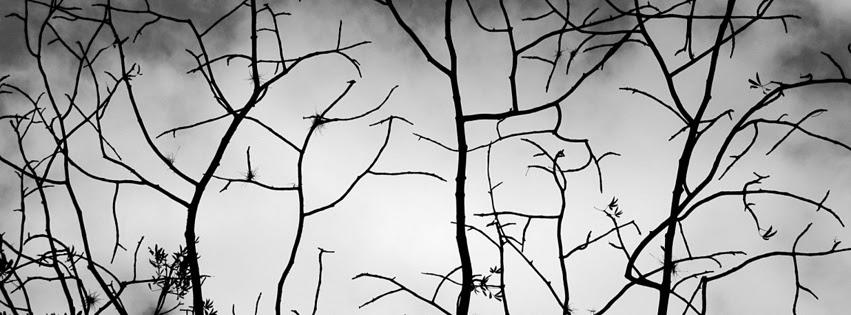 Photo De Couverture Blanc Photos De Nature