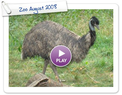 Click to play Zoo August 2008