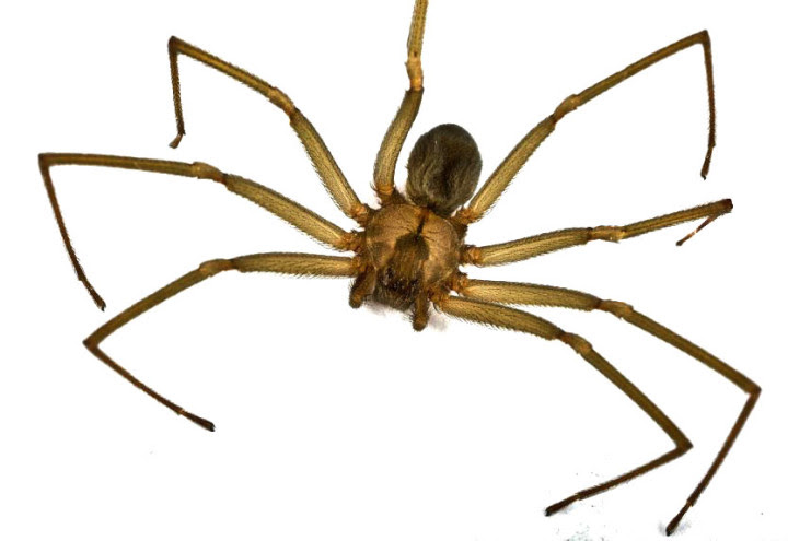10 most dangerous spiders in the world 9