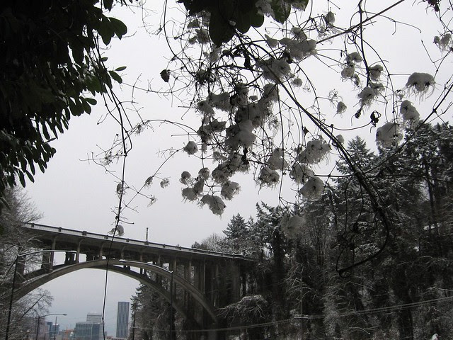 Snowflowers, Vista Bridge