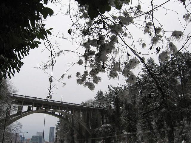 Snowflowers, Vista Bridge