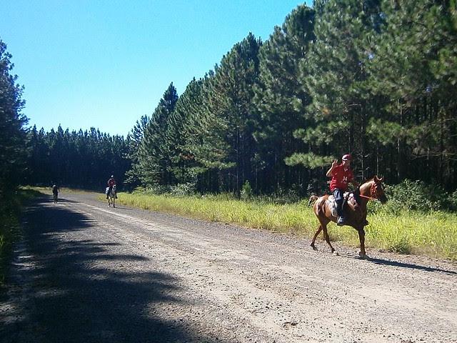 Cross Country Horse Racing