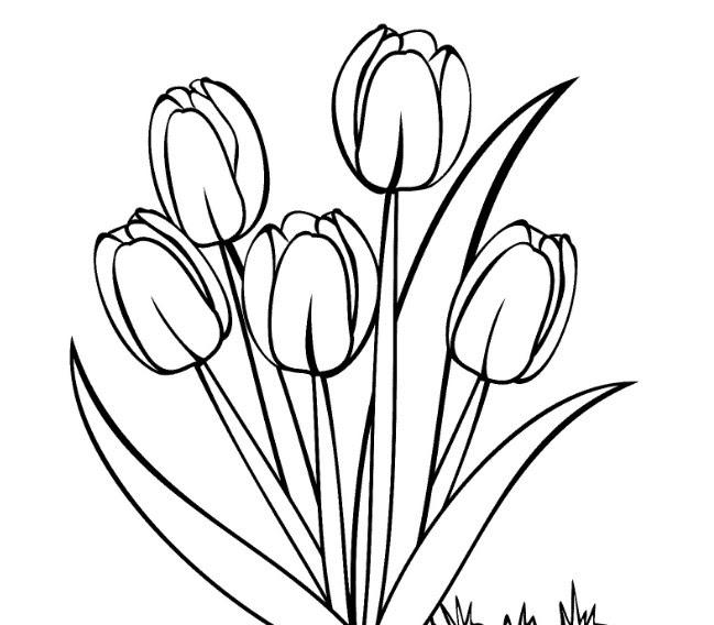 47 Mewarnai Gambar Bunga Tulip Unik Terbaru Blog Teraktual