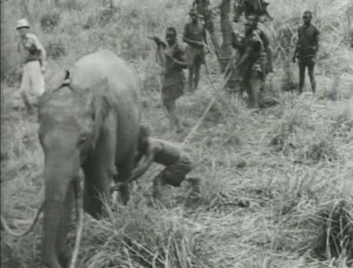 Elephant%20Capture-10 by bucklesw1
